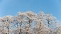 Vareste talvepäevad