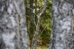 Puude vahel