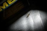 Sellised gekod sadasid majutusasutuses laest alla .. ikka oma 15cm pikad